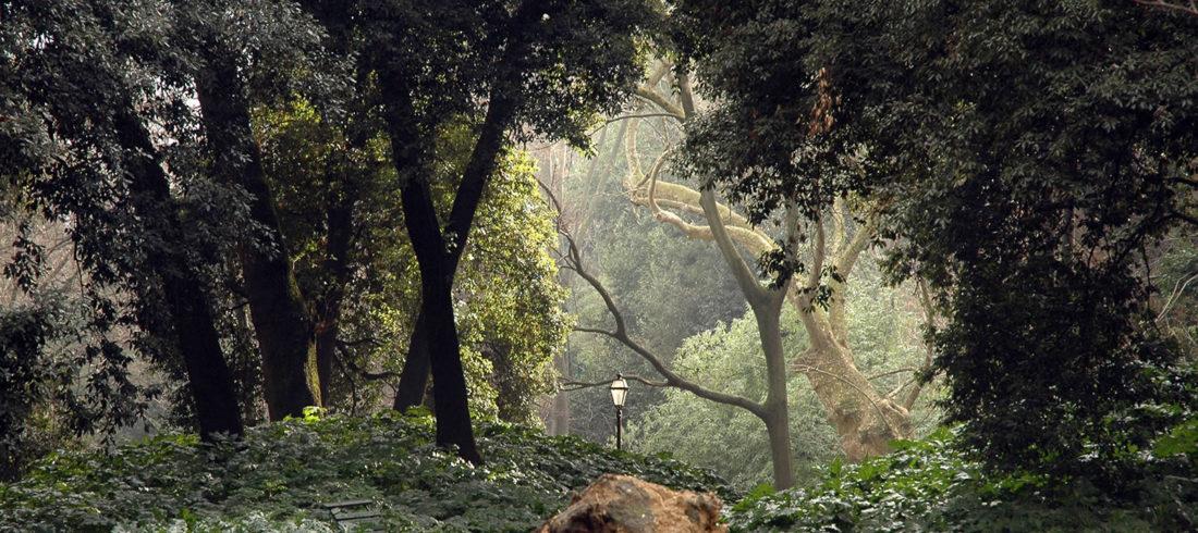 Orto Botanico, Roma