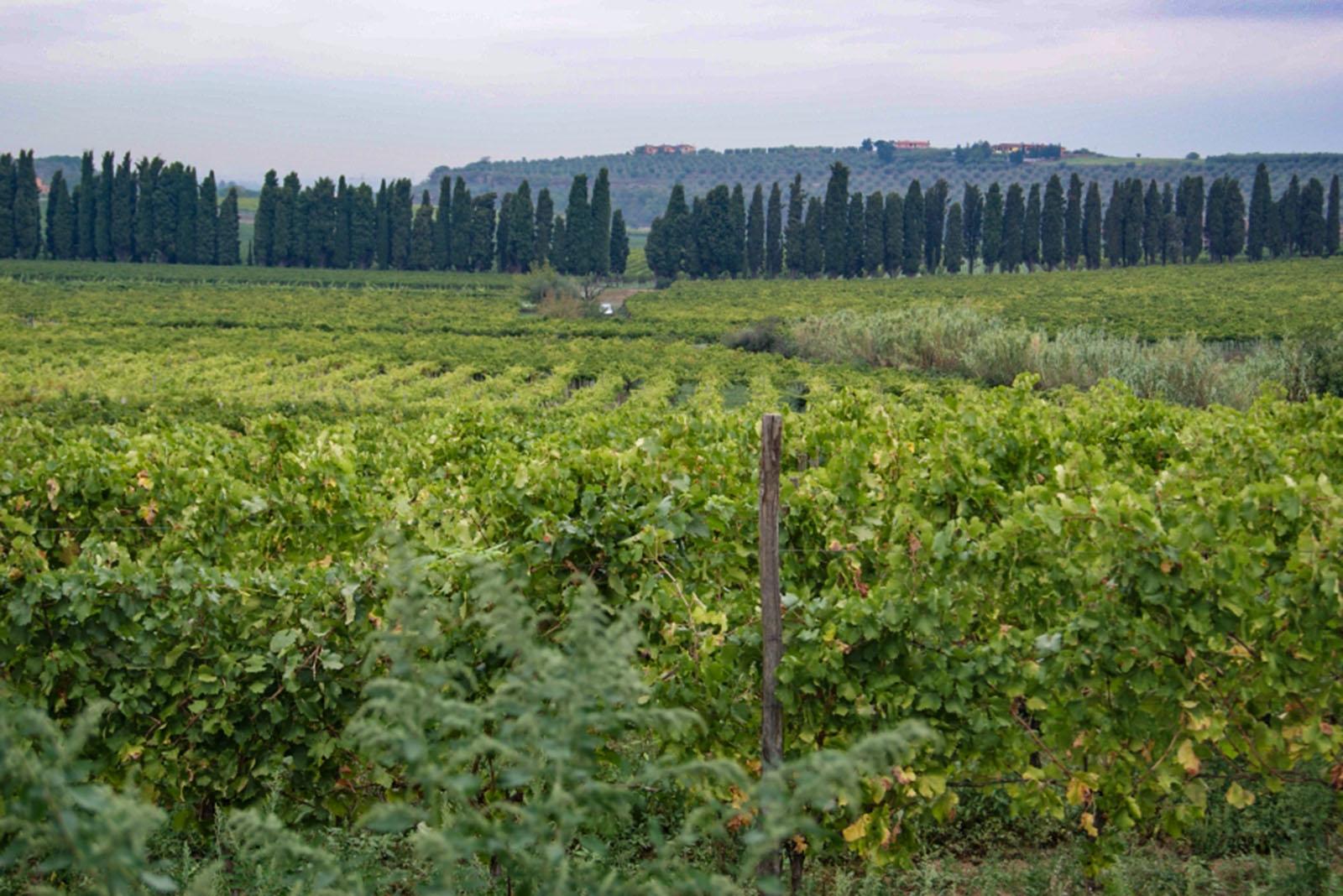 Vigne e paesaggio a Frascati